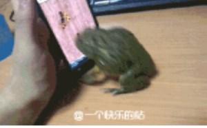 动态搞笑图片:这青蛙也太搞了吧。