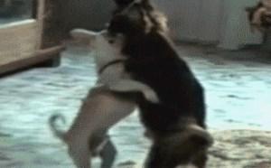 搞笑图片大全第三期:小狗也疯狂