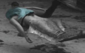优美漂亮美人鱼真身的图片动态图