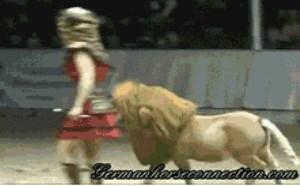 超级可爱小动物搞笑gif图片大全 喜欢卖萌搞笑小动物gif动图