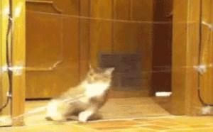 猫星人过保鲜膜隔离带搞笑动态图片
