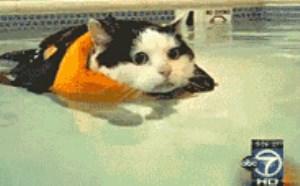 没内涵邪恶gif小猫游泳搞笑动态图片