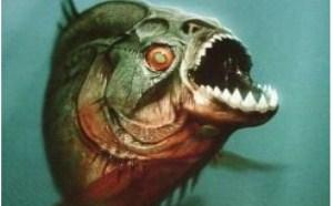 食人鱼图片_食人鱼长什么样?