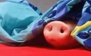 猪头未出猪鼻子搞笑gif图片大全