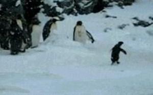 企鹅搞笑gif图片笑死这吊样不得不服