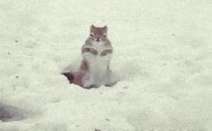 小地鼠快节奏摇摆搞笑gif!动物搞笑图片