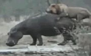 xxoo搞笑动态图片笑死人:动物的原始愿望