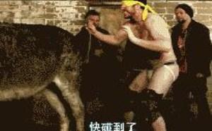 驴踢的好蛋痛啊!搞笑的gif图片