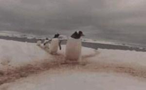 企鹅搞笑动态图片笑死人图片大全