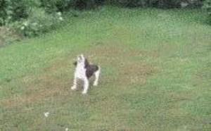 小狗狗搞笑图片大全可爱:人类的好朋友