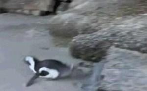 qq企鹅动态图片表情包—企鹅搞笑动态图片