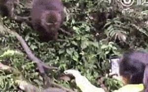 猴子搞笑图片大全!猴子抢东西