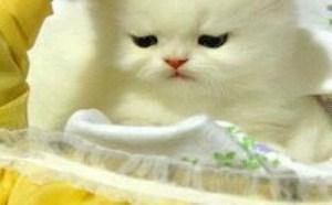 小猫小狗搞笑qq表情图片大全搞笑
