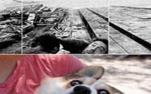 搞笑gif动态图片多玩!人活得不如狗