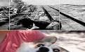 小狗邪恶gif动态图片大全