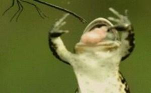 青蛙gif图片大全 彩色青蛙gif吃虫子