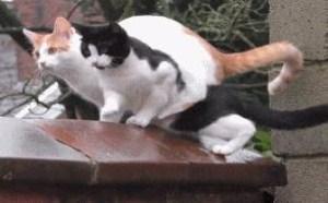 小猫咪偷情约会搞笑gif动态图