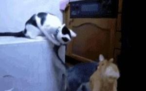 3只小猫之间调戏小猫搞笑gif动态图片