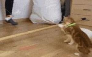 小猫跳高小猫比赛 搞笑gif图片