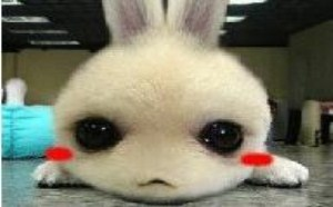 可爱的小宠物眨眼萌萌达gif图片