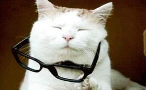 小猫带眼镜装学文 动态内涵图片