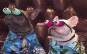小狗狗直瞪眼 好搞笑的gif图片