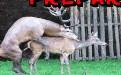 动物后入式邪恶动态gif图片:不要忽约男性的冲击力有多大