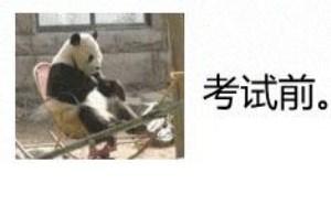 大熊猫搞笑gif图片:考试过程图