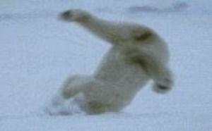 白极熊钻冰搞笑动态图:今天怎么这么硬