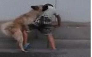 没内涵没底线gif图片:小色狗你也太欺负人了吧