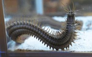 海底最可怕的虫子,放大100倍的蜈蚣让人毛骨悚然